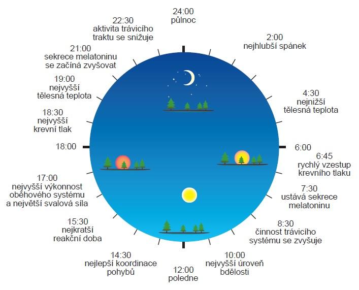 Každodenní lidský biorytmus