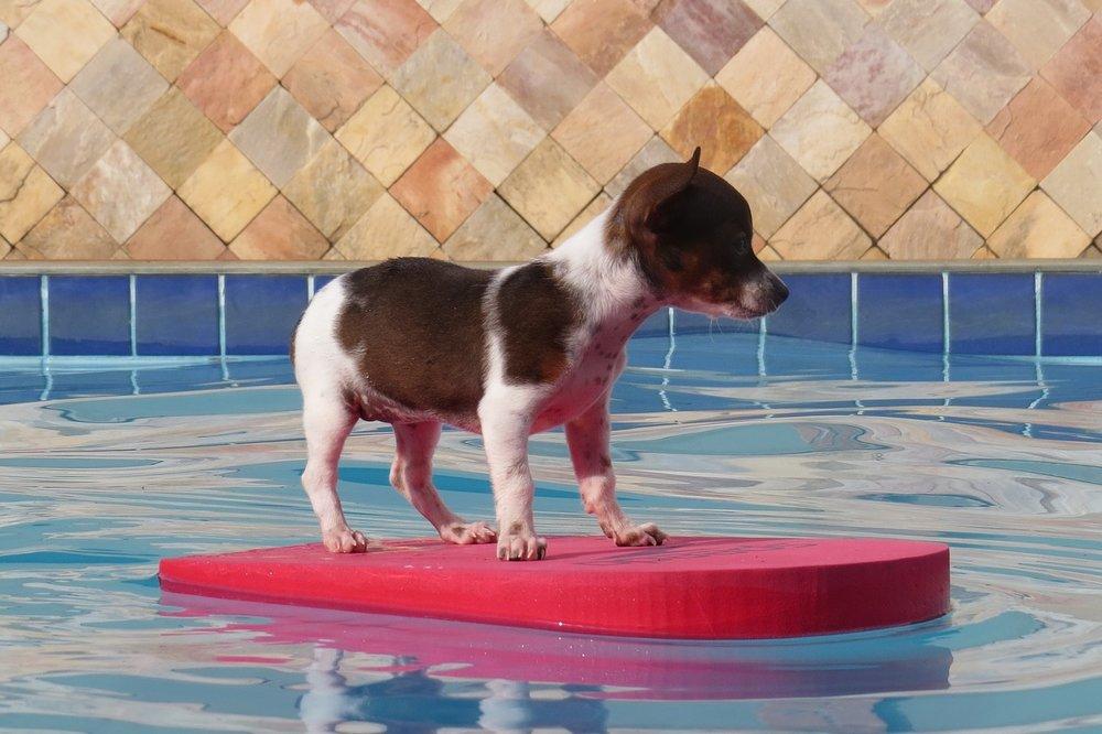 Pes plující po hladině bazénu