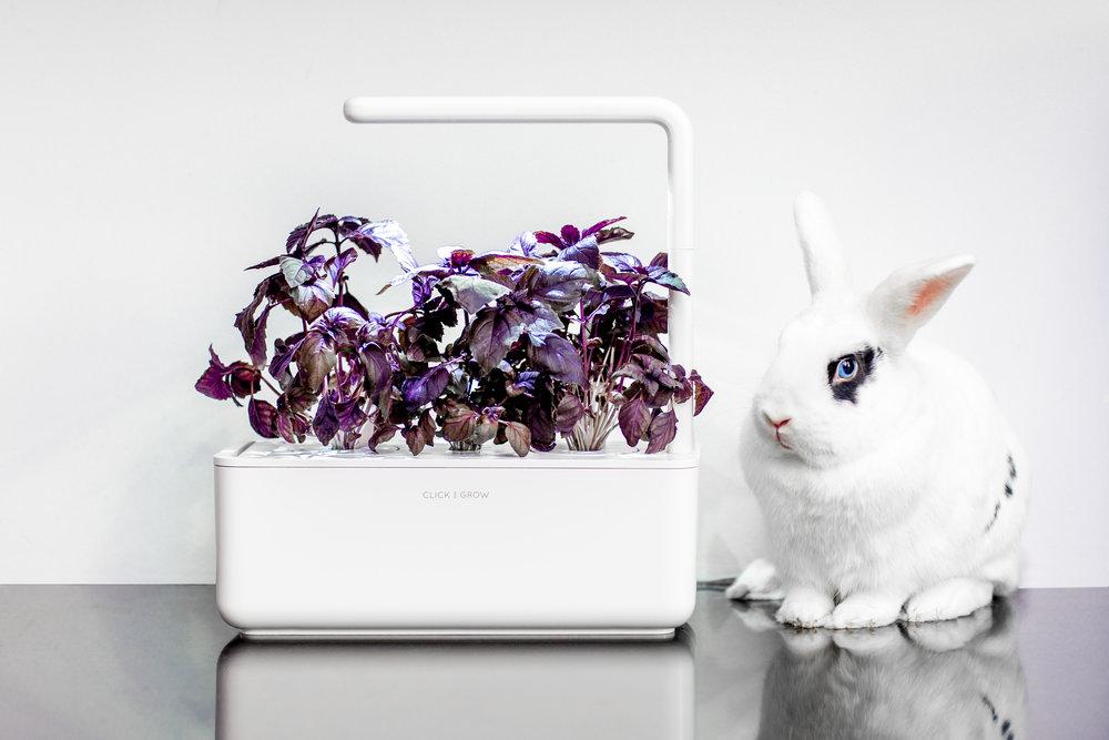 Inteligentní květináč a králík