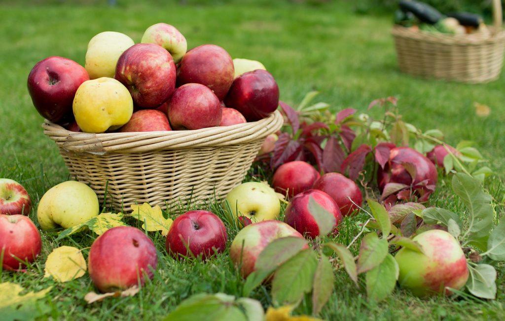 Jablka na trávníku