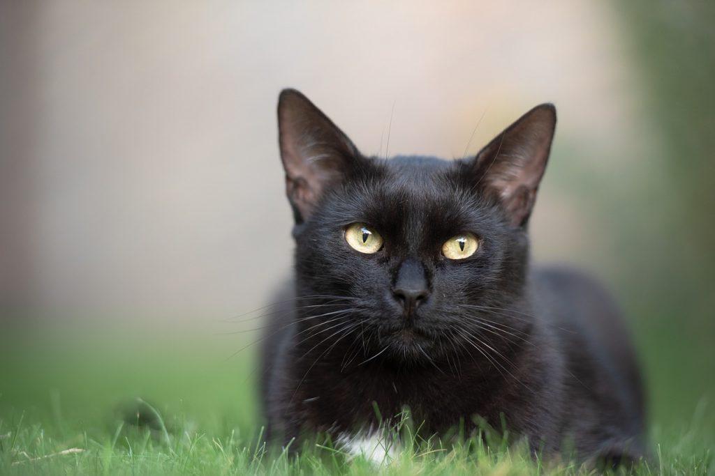 Kočka ve trávě